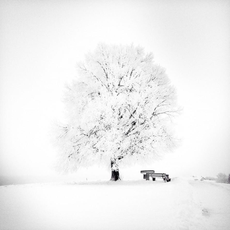 33486_21741-3089_1_1_2_JanaBochet02-Trees-950x950