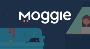 Украинский стартап для любителей котиков Moggie привлек $70 000 инвестиций