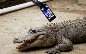 Блогер попытался скормить iPhone крокодилу